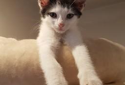 KOT: Tokyo z Fundacji Miasto Kotów - taka spokojna koteczka...:)