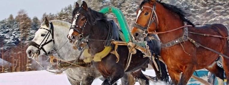Ukraina.Stajnia koni,koszary,stragi,gospodarstwo rolne,laki,pastwiska-1