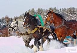 Ukraina.Stajnia koni,koszary,stragi,gospodarstwo rolne,laki,pastwiska
