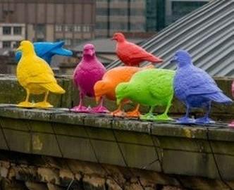 gołębie kolorowe