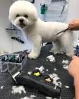Fryzjer dla psa, Strzyżenie psów. Warka , Chynów , Grójec