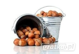 Ukraina.Plantacja leszczyny,orzechy laskowe 2 zl/kg w skupie sezonowy