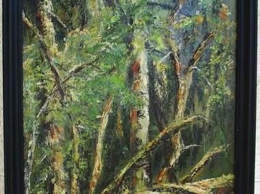Powalone drzewo-1