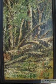 Powalone drzewo-2