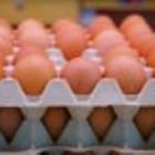 Ukraina.Jaja kurze dietyczne od 1,7zl opakowanie 10szt.Swieze