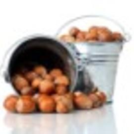 Ukraina.Orzechy wloskie,laskowe 3 zl/kg w skupie sezonowym.Sprzedam PGR