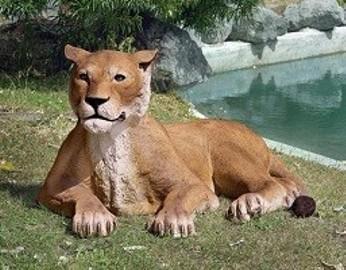 lew w ogrodzie