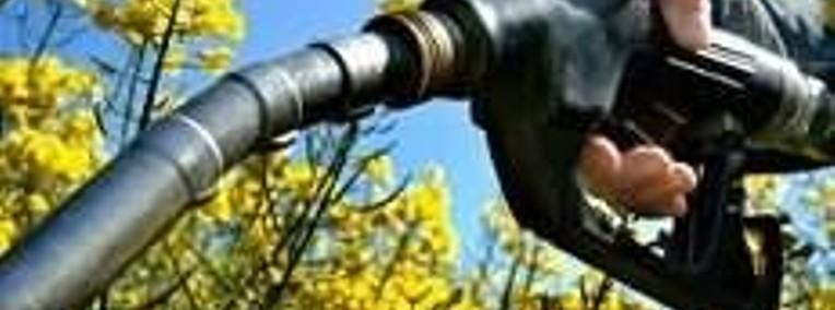 Ukraina.Ziarna rzepaku 1150 zl/tona sertyfikowane na biopaliwa i cele-1