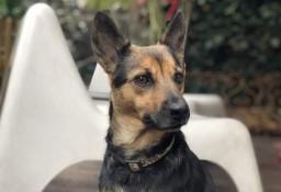Tosia - urocza sunia czeka na nowego właściciela