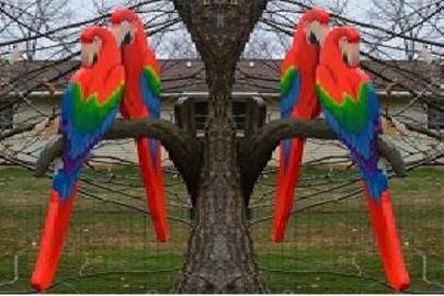 papugi z drewna
