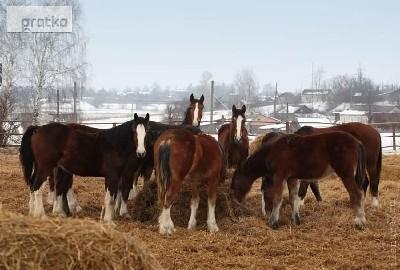 Ukraina.Pasieka,stadnina koni,bar,domy drewniane na 2 ha.Cena 8 tys.zl