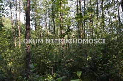 Działka leśna Szczucin