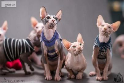 2 mioty Kociaki kontaktowe Mruczki o kochanym charakterze ( Rod. FPL )