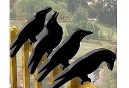 wrony na balkonie