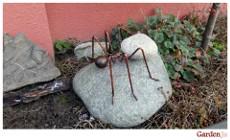 mrówka ozdoba