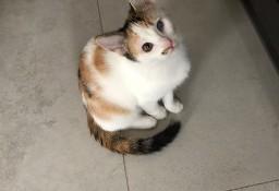 VIKI I BIKI dwie cudowne kotki polecają się do adopcji