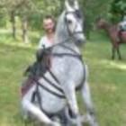 Ukraina. Konie 900zl, zwierzeta hodowlane, ogiery, klacze, siwe rysaki. Stajnia koni