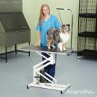 STRZYŻENIE PSÓW i  kotów WARKA -  KURS STRZYŻENIA  groomingu PSÓW