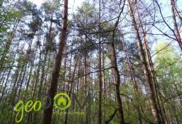 Działka leśna Hniszów