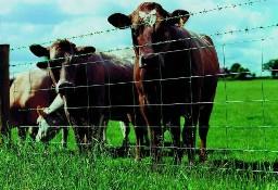 Ukraina.Byczki,jalowki 4 zl/kg.Sprzedam stada bydla miesnego,mlecznego