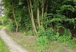 Działka leśna Krzywowierzba