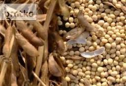 Ukraina.Soja warzywna,nasiona suche 1,4 zl/kg,olej,makuch,maczka.