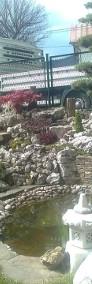 USTROŃ - OGRODY , Usługi ogrodnicze , pielęgnacja zieleni, TUJE-3