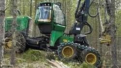 Kurs żurawie leśne przeładunkowe