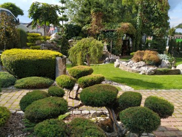 Bonsai , bonsai do ogrodu , bonsai ogrodowe , krzewy formowane Bielsko Biała woj.śląskie