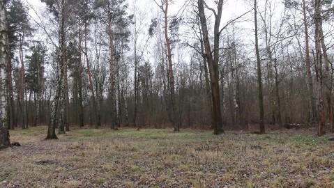 Działka leśna Baniocha