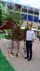 Koń Dekoracja rzeźba do ogrodu ze stali corten