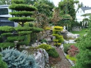 Drzewka Bonsai do ogrodu ,  Bonsai ogrodowe -cena  ,  śląsk