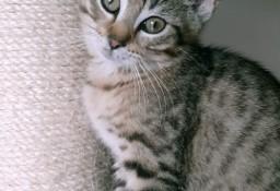 KOT: Pieroży z Fundacji Miasto Kotów - najpiękniejszy dla Ciebie