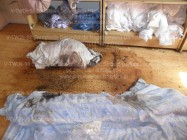 Trzcianka Odkażanie czyszczenie pomieszczeń po zwłokach zmarłych wypadkach