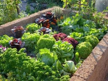 Nawóz 100% naturalny obornik, idealny do warzyw, kwiatów oraz roślin-1