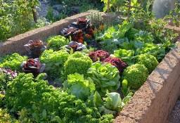 Nawóz 100% naturalny obornik, idealny do warzyw, kwiatów oraz roślin