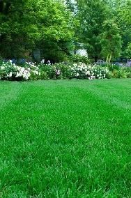 Nawóz 100% naturalny obornik, idealny do warzyw, kwiatów oraz roślin-2