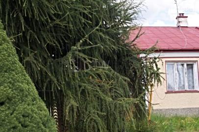 Dom Wola Worowska