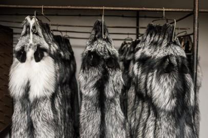 Sprzedam skóry z lisa srebrnego - ładne, długi włos
