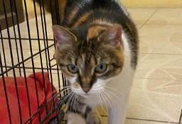 Bardzo przyjazna i związana z człowiekiem kotka szuka domu