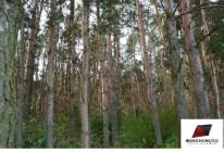 Działka leśna Zieleniew