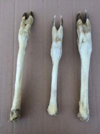 Nogi sarnie białe - 3 sztuki