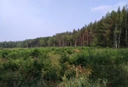 Puszcza Bialowieska - teren inwestycyjny