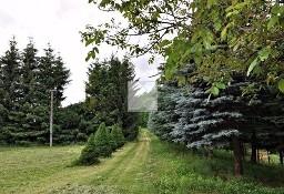 Działka leśna Olszany