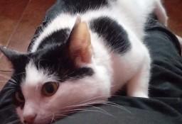 KOT: 2,5-roczny Cosiek z Fundacji Miasto Kotów - przeszedł swoje w życiu, czy ktoś go pokocha?