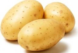 Ukraina.Warzywa,ziemniaki jadalne 0,20 zl/kg + krochmalnia na sprzedaz