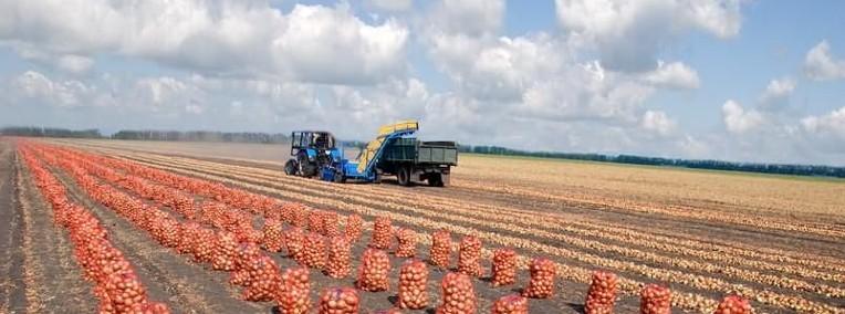Ukraina.Warzywa,ziemniaki 0,25 zl/kg.Grunty rolne 150 zl/ha.Oferujemy-1