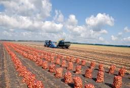 Ukraina.Warzywa,ziemniaki 0,25 zl/kg.Grunty rolne 150 zl/ha.Oferujemy