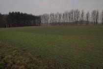 Działka rolna Rąbczyn