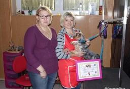 KURS STRZYŻENIA PSÓW 12 dni 4500 zł PROMOCJA psy do nauki strzyżenia